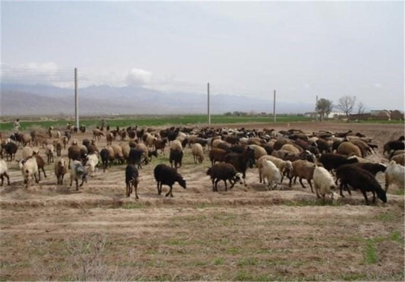 جلوگیری از گسترش دامداری های غیر اصولی در شهرستان فردوس
