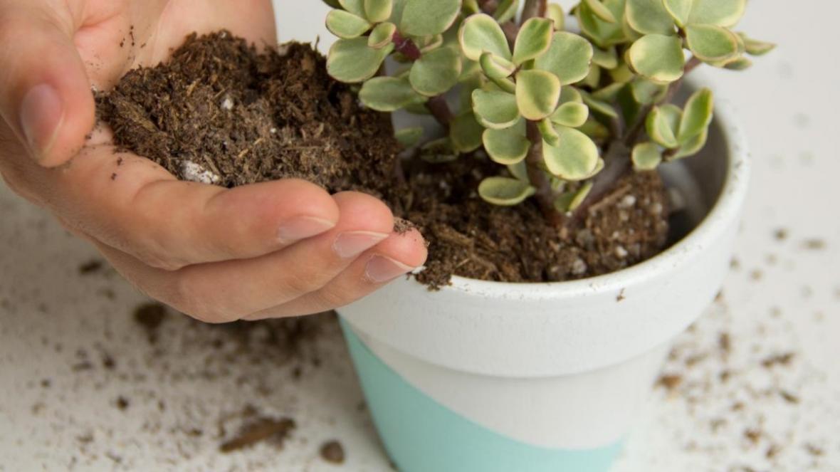 بهترین فصل تعویض خاک گلدان چه زمانی است؟ نکات و مراحل آن