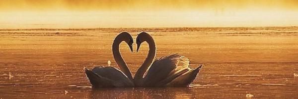 بهترین پیغام های سالگرد ازدواج؛ عاشقانه، ادبی و شعر