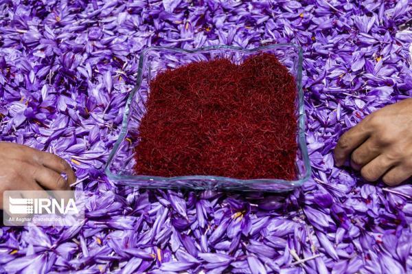 خبرنگاران فروش کامل زعفران خرید حمایتی سال 98 تمام شد