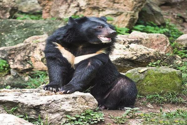 پنجه در پنجه خرس